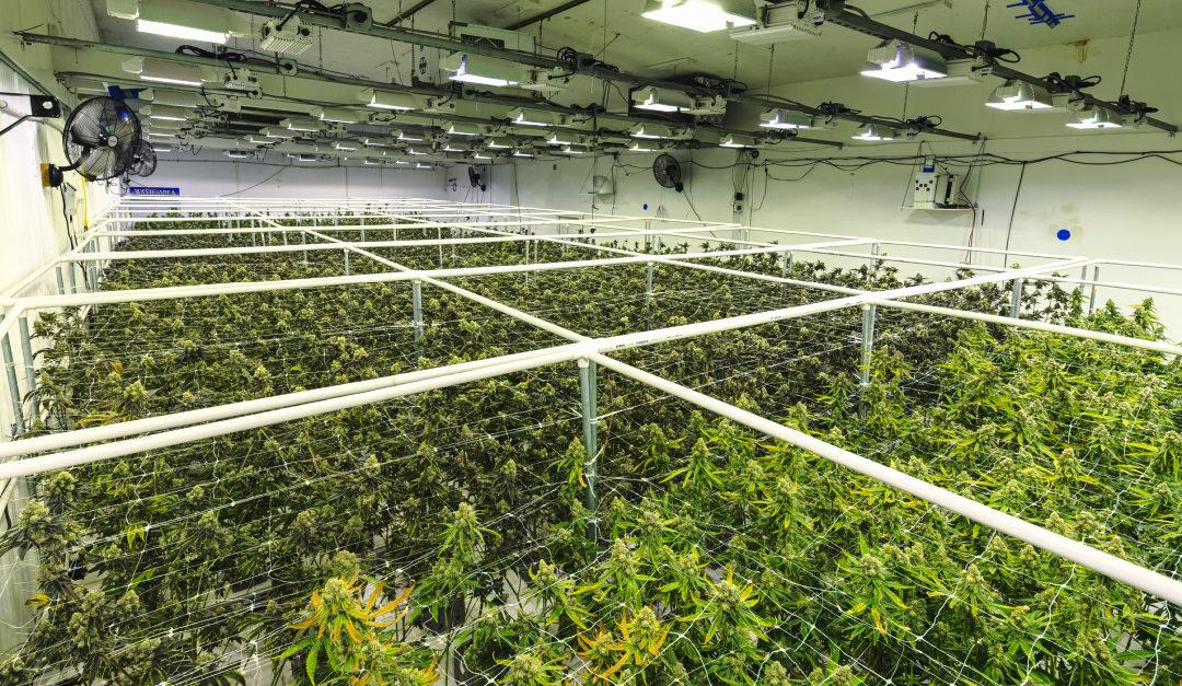 Technology Guidance Links Missouri's Cannabis Supply Chain